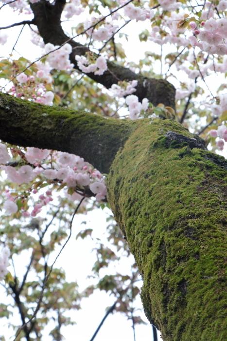 葉かげに垂れて咲く…_f0083400_22365266.jpg