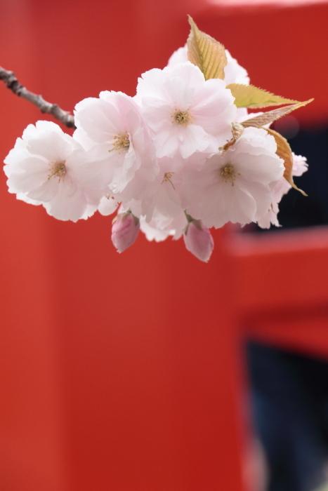 葉かげに垂れて咲く…_f0083400_22373280.jpg