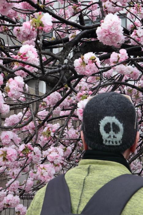 葉かげに垂れて咲く…_f0083400_22381058.jpg