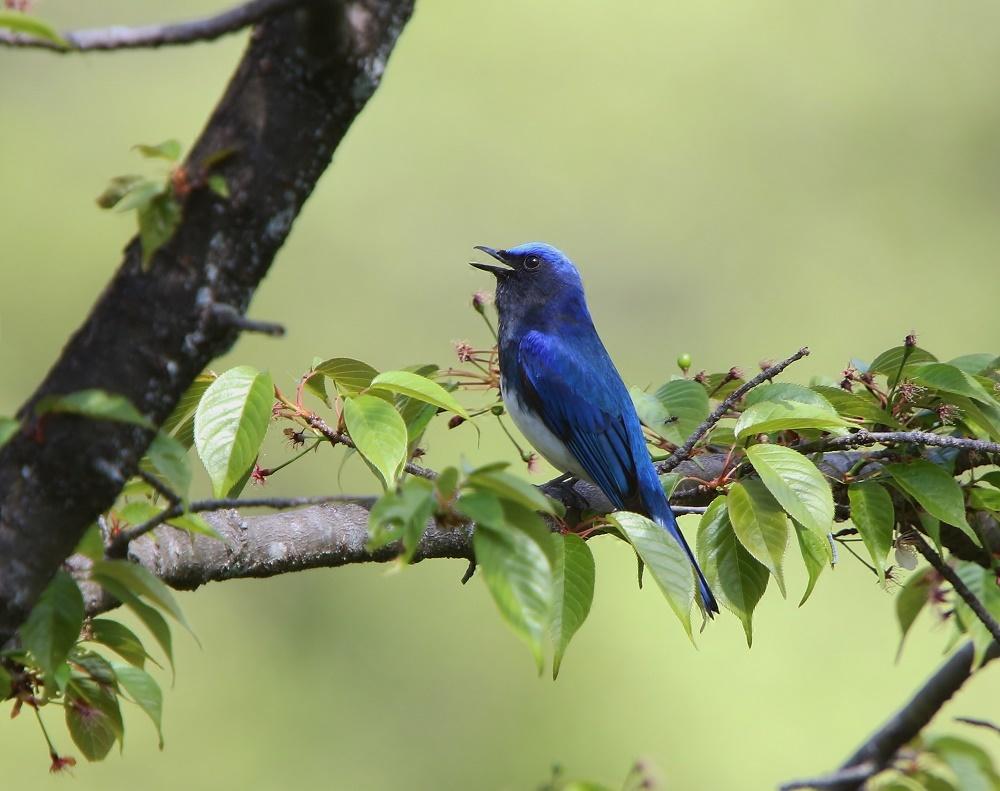 夏鳥は順調の様です、その2、_f0305401_16291304.jpg