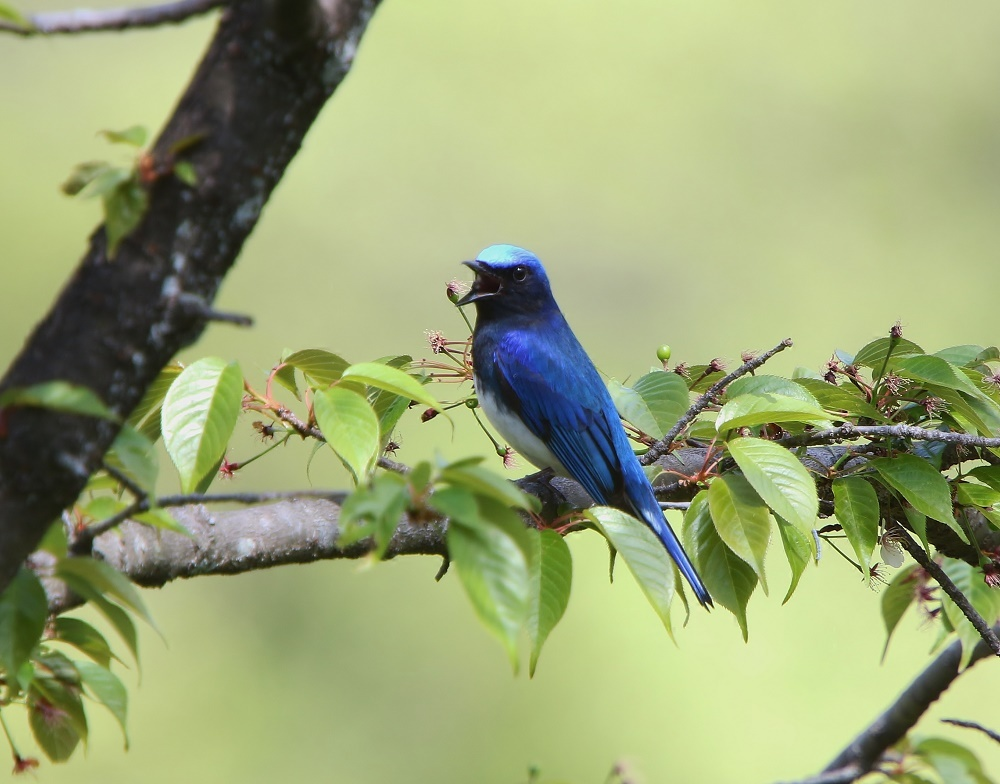 夏鳥は順調の様です、その2、_f0305401_16291866.jpg