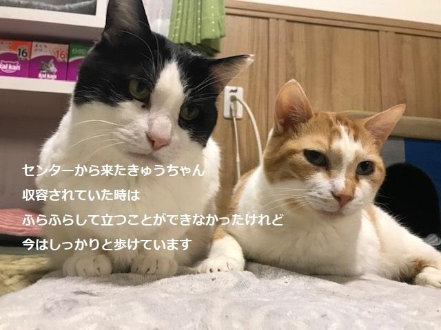 あめくん 新生活スタート!_f0242002_23561963.jpg