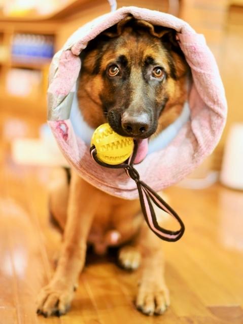 タフな子犬_d0360206_00365194.jpg