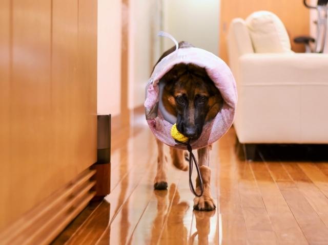 タフな子犬_d0360206_00365754.jpg