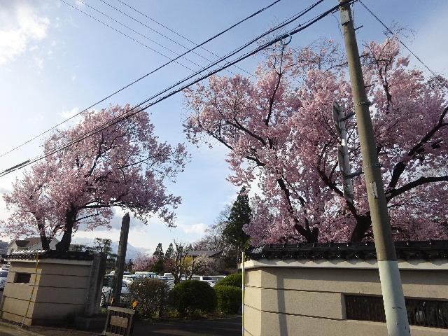 カタクリの花も咲いていました。_f0105112_17560444.jpg