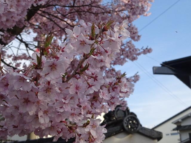 カタクリの花も咲いていました。_f0105112_17560453.jpg