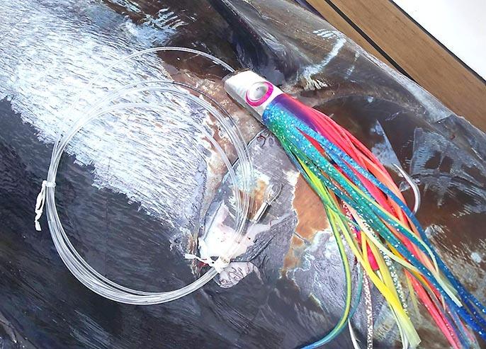 琉球BGFT初日、カジキが釣れています。_f0009039_14082414.jpg