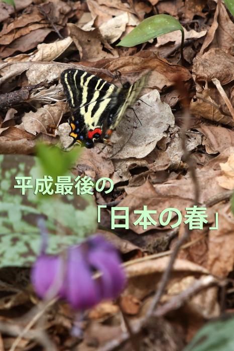 b0144049_16213863.jpg