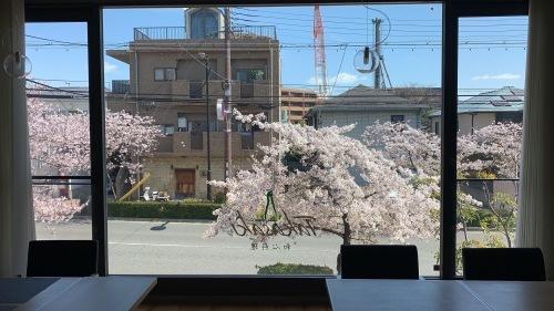 桜 2019 ②_b0290049_21351432.jpeg