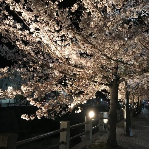 桜 2019 ③_b0290049_21354081.jpeg
