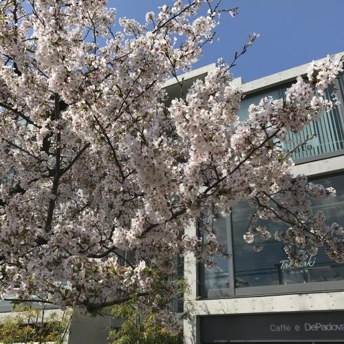 桜 2019 ②_b0290049_21593701.jpeg