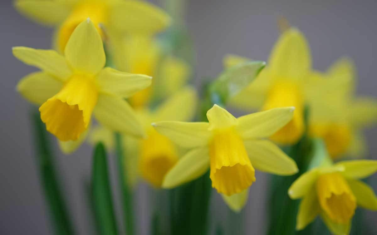 花壇の花...2_e0220159_18060782.jpg