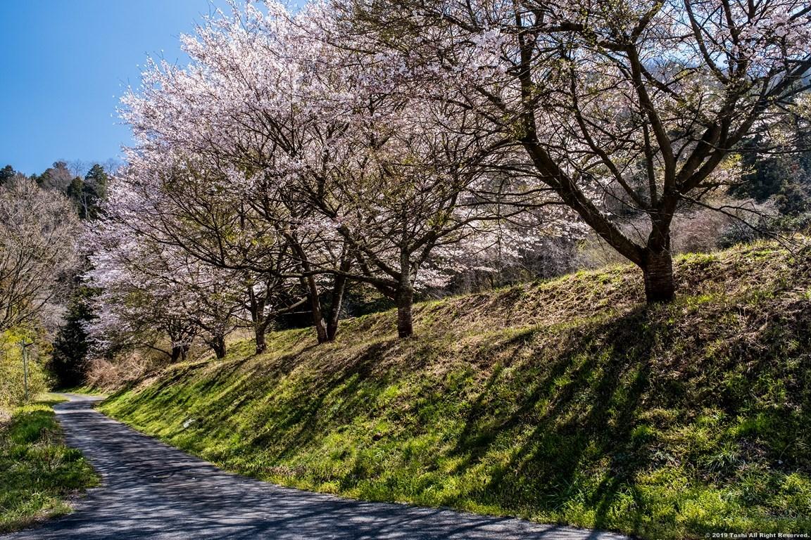 宇陀の桜 モクレン_c0350572_22485756.jpg