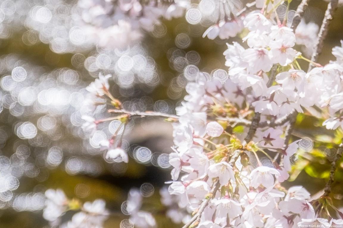 宇陀の桜 モクレン_c0350572_22493860.jpg