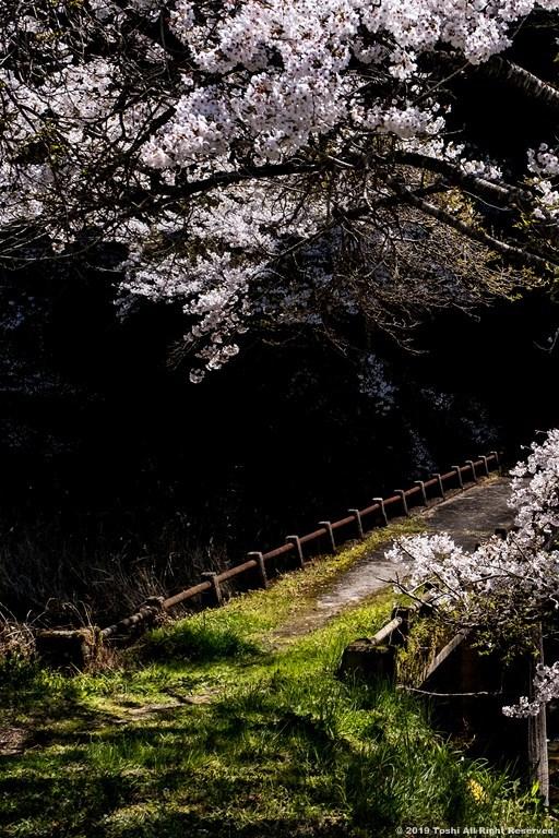 宇陀の桜 モクレン_c0350572_22494473.jpg