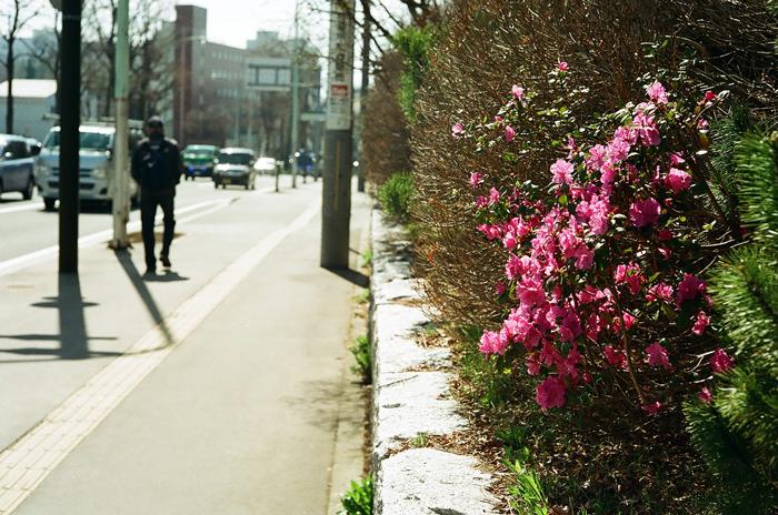 咲き始めたエゾムラサキツツジと池袋交通事故その後_c0182775_175571.jpg
