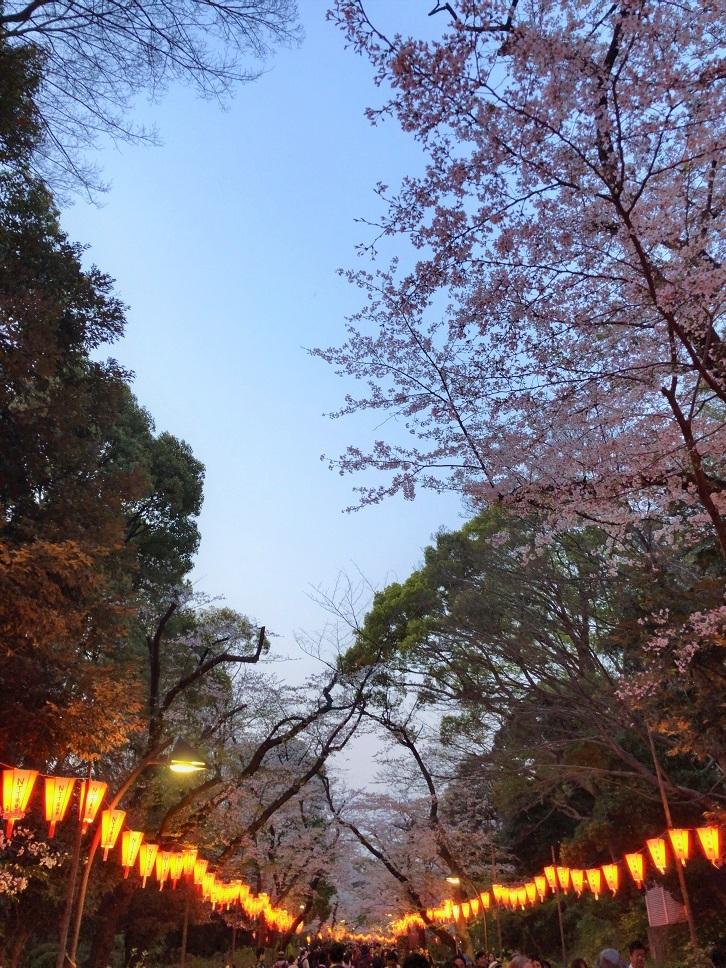 思い出の茶碗と上野の桜_b0362781_10490381.jpg