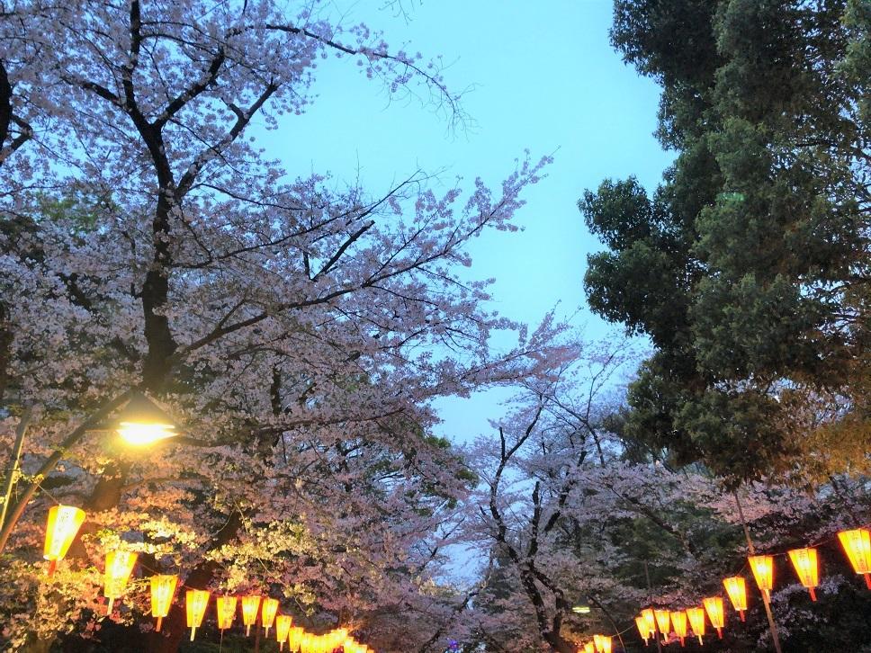 思い出の茶碗と上野の桜_b0362781_10493710.jpg