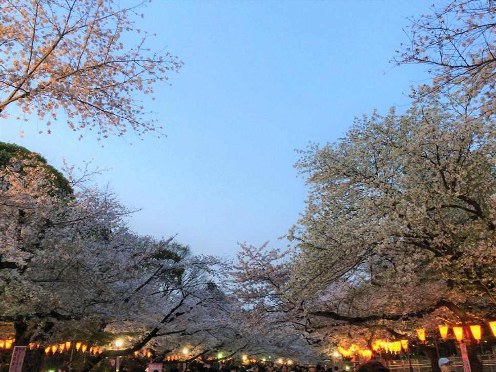 思い出の茶碗と上野の桜_b0362781_10495488.jpg
