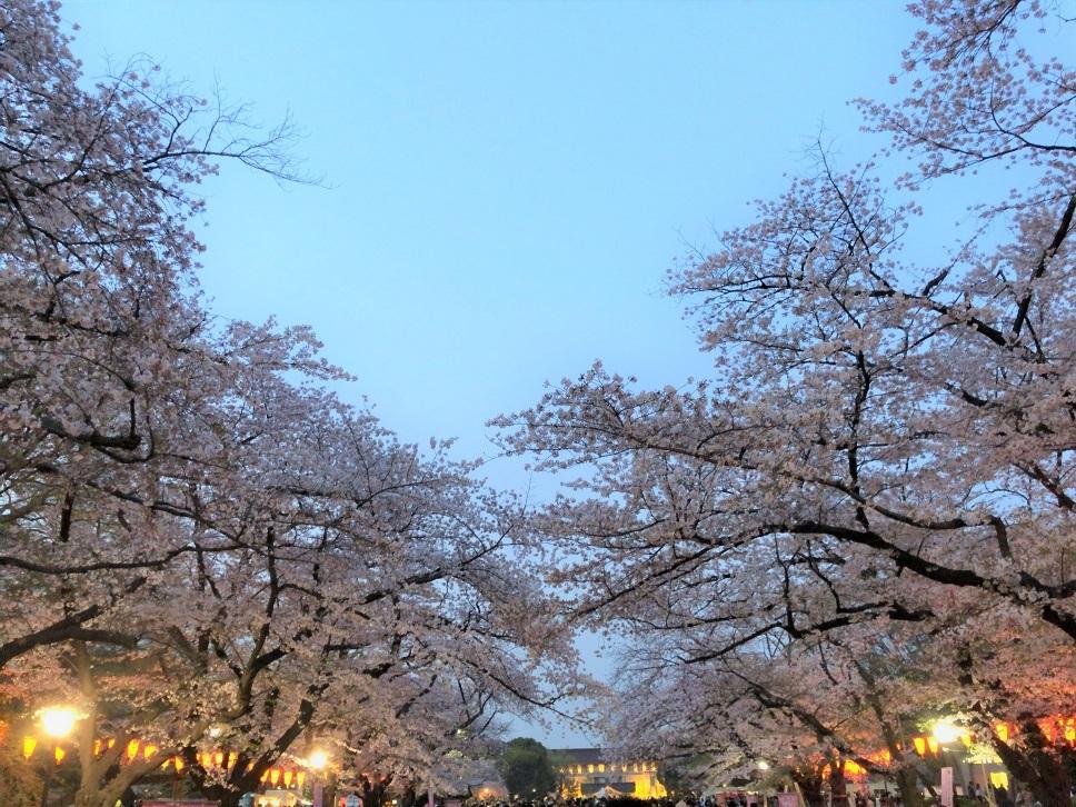 思い出の茶碗と上野の桜_b0362781_10501076.jpg