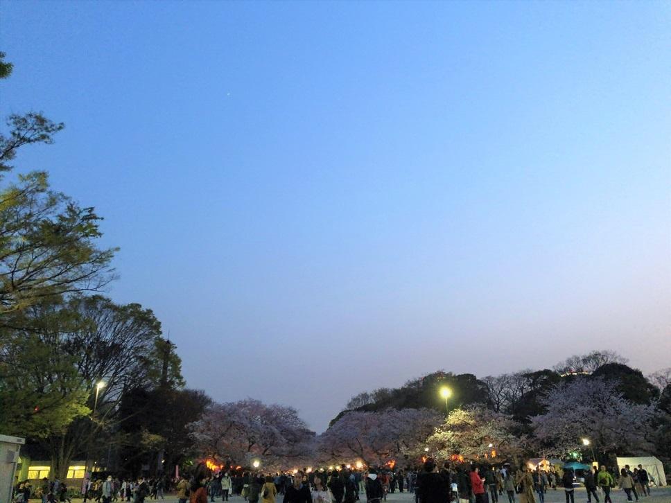 思い出の茶碗と上野の桜_b0362781_10502895.jpg