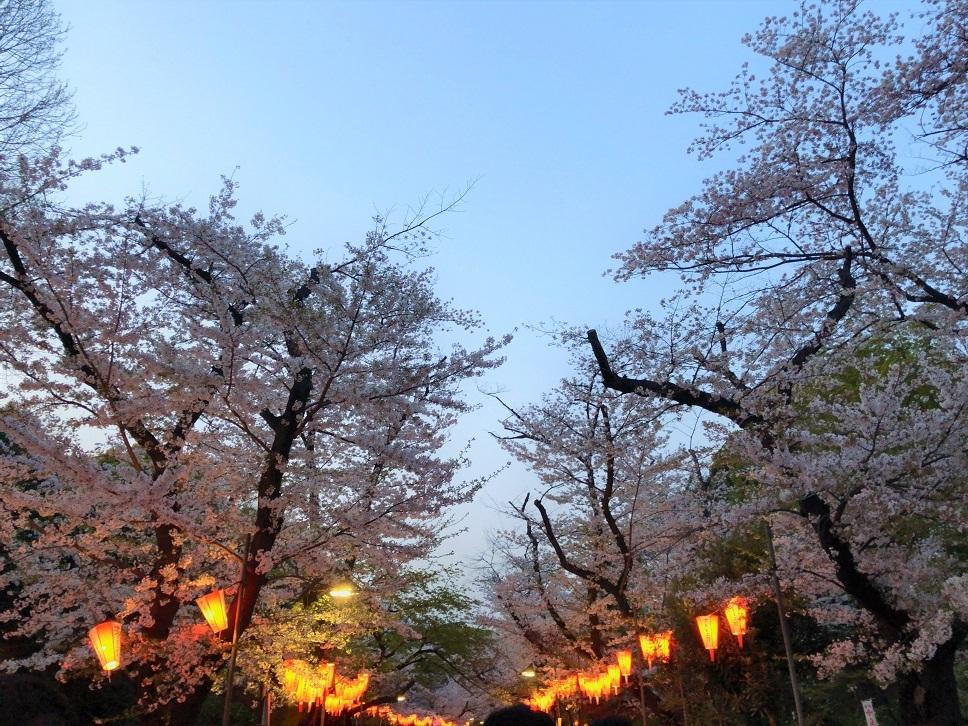 思い出の茶碗と上野の桜_b0362781_10592478.jpg