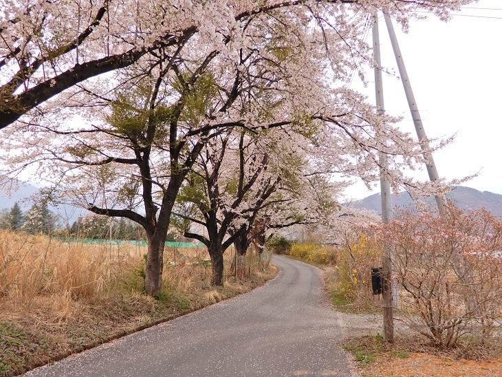 武川町F山さん邸の現場より 3_a0211886_14371372.jpg
