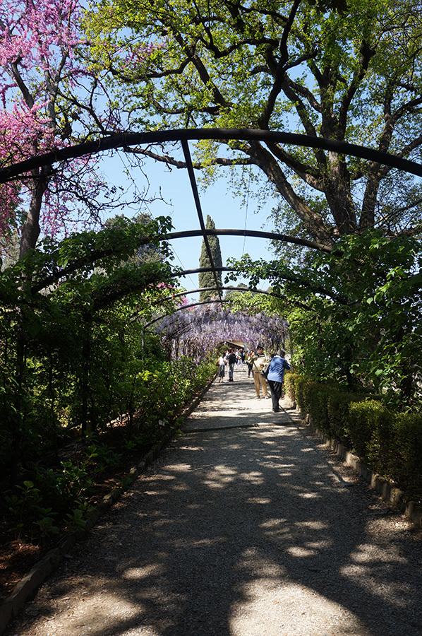 藤のトンネル〜バルディーニ庭園_f0106597_05370308.jpg