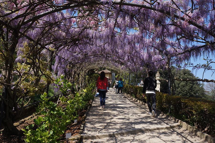 藤のトンネル〜バルディーニ庭園_f0106597_05380208.jpg