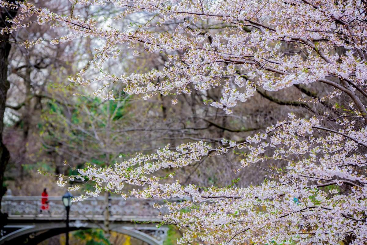 Spring New York 2019-900作品達成記念④ー_a0274805_07054034.jpg