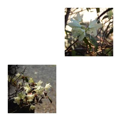 b0352112_1775629.jpg