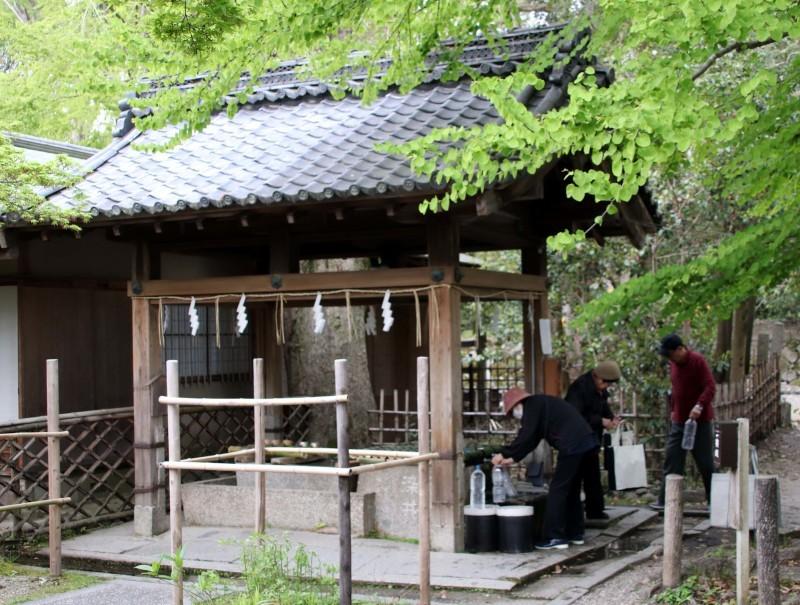 梨の木神社 山吹と新緑_e0048413_21435520.jpg