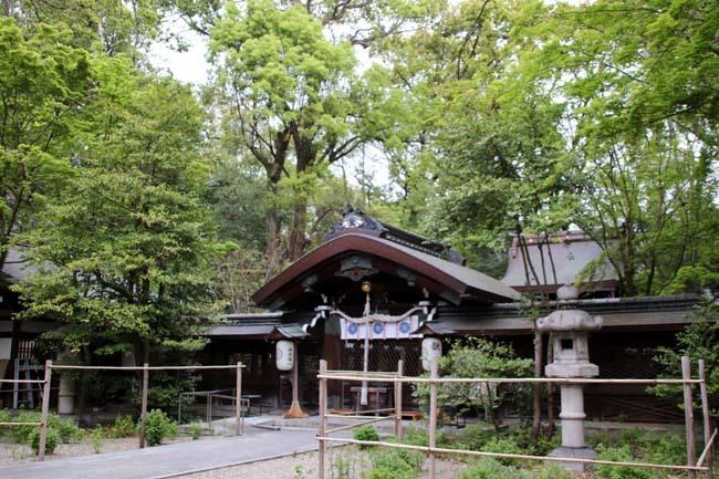 梨の木神社 山吹と新緑_e0048413_21440129.jpg