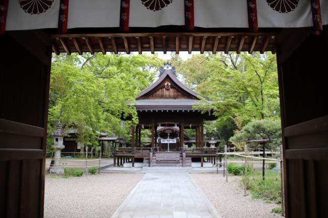 梨の木神社 山吹と新緑_e0048413_21440638.jpg