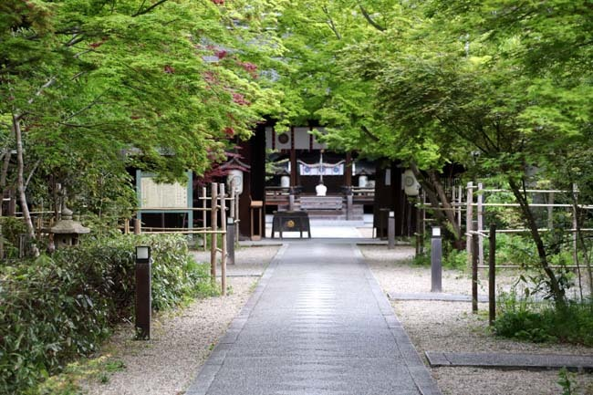 梨の木神社 山吹と新緑_e0048413_21513278.jpg