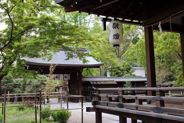 梨の木神社 山吹と新緑_e0048413_21514055.jpg