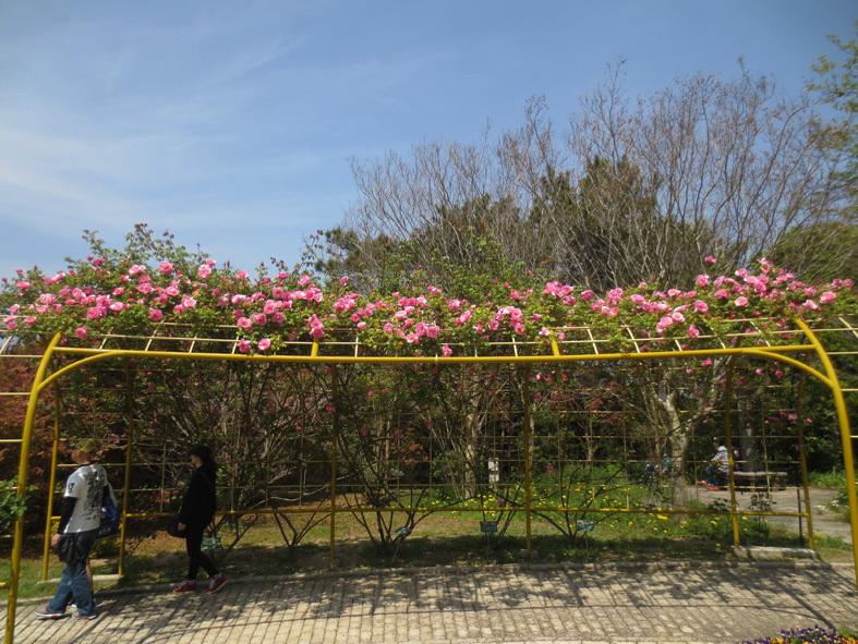 ■満開のネモフィラを観に海の中道海浜公園へ、そして週替わりの夕暮れ[4/21]_d0190217_22182106.jpg