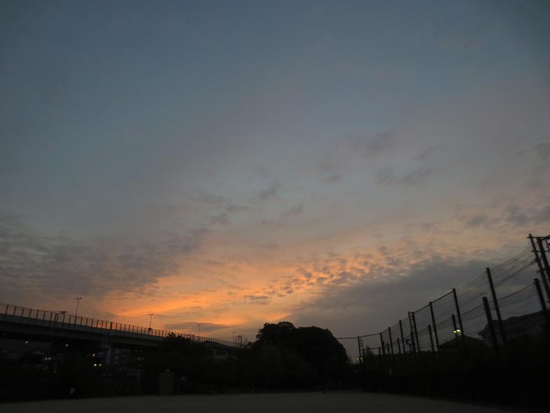 ■満開のネモフィラを観に海の中道海浜公園へ、そして週替わりの夕暮れ[4/21]_d0190217_22191824.jpg