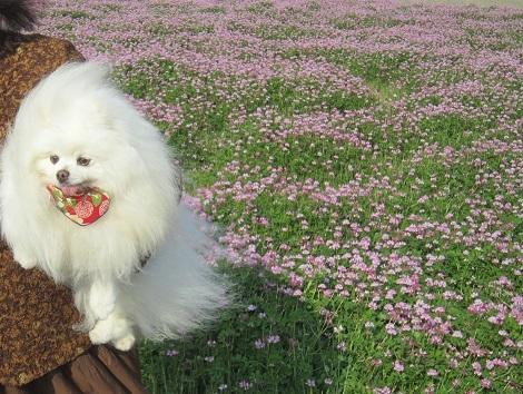 春ですね~♪_b0177436_22321497.jpg