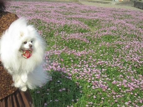 春ですね~♪_b0177436_22325630.jpg