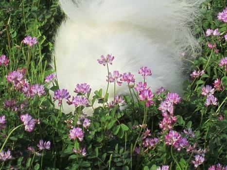 春ですね~♪_b0177436_22331507.jpg