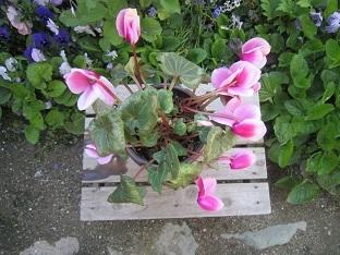 春ですね~♪_b0177436_22333724.jpg