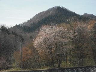 お山の桜_c0216937_07443413.jpg