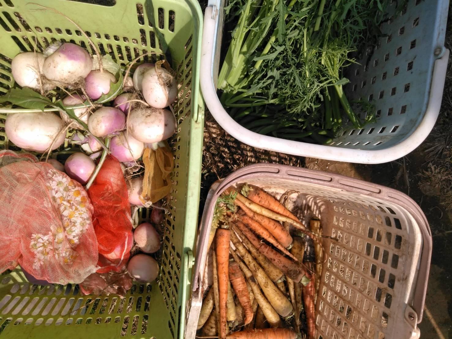 夏野菜の畝作り 今朝は4名です_c0222448_15245242.jpg