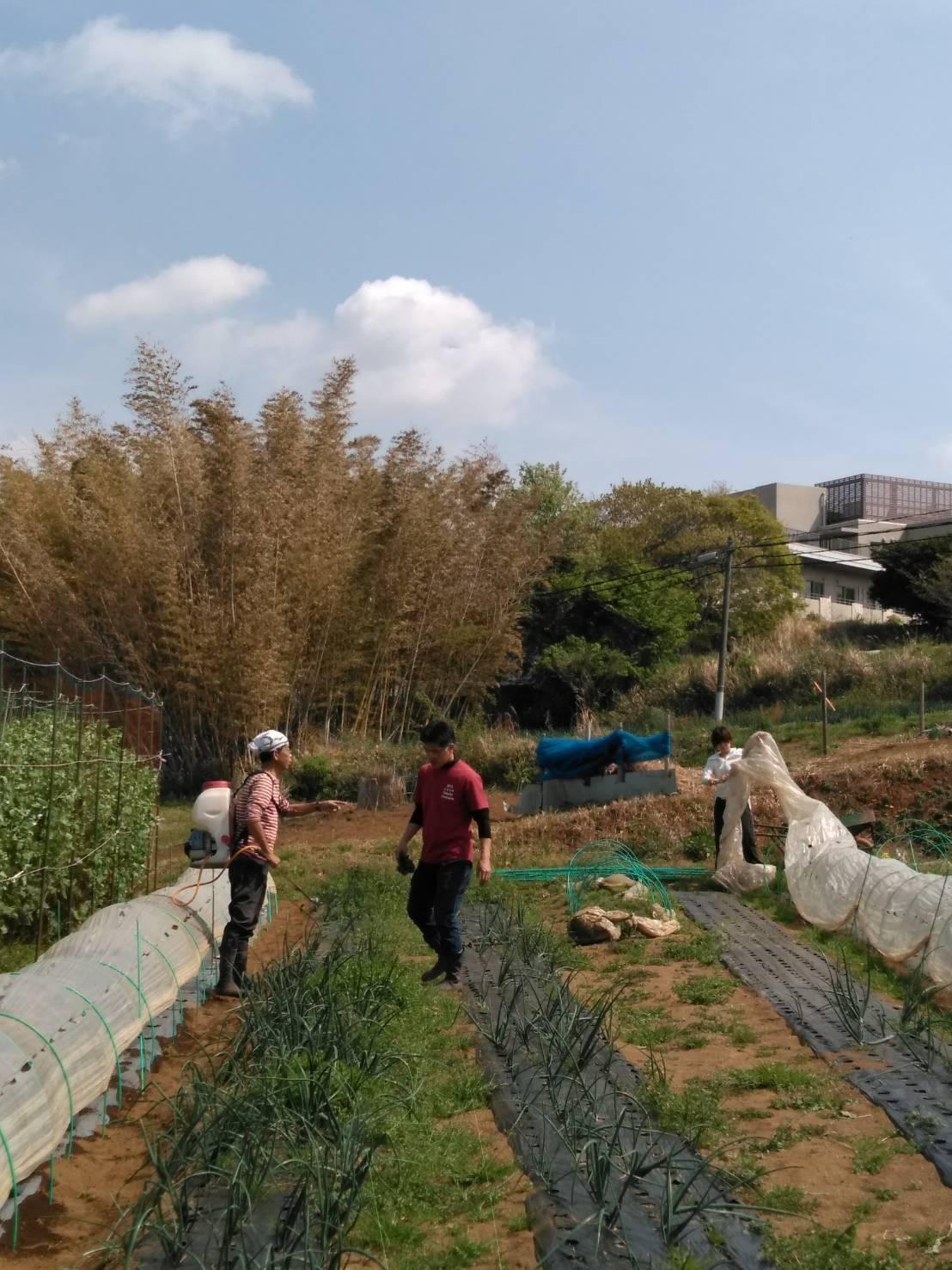 夏野菜の畝作り 今朝は4名です_c0222448_15261529.jpg