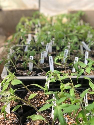 夏野菜の畝作り 今朝は4名です_c0222448_15270822.jpg