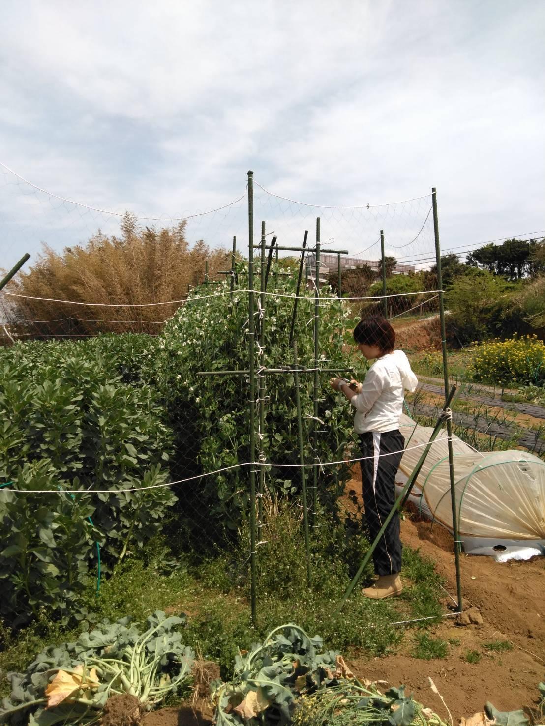 夏野菜の畝作り 今朝は4名です_c0222448_16244588.jpg