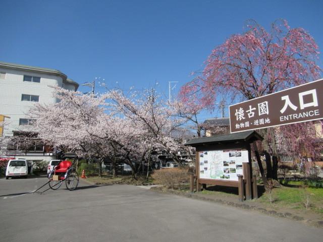 小諸城址・懐古園 * 桜が満開でした~軽井沢の桜も開花しました♪_f0236260_03001676.jpg