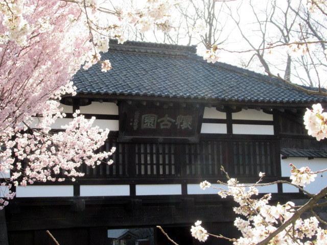 小諸城址・懐古園 * 桜が満開でした~軽井沢の桜も開花しました♪_f0236260_03053427.jpg