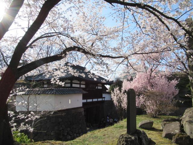小諸城址・懐古園 * 桜が満開でした~軽井沢の桜も開花しました♪_f0236260_03061250.jpg